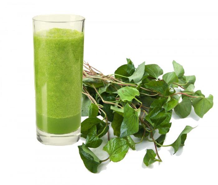 Rau diếp là loại cây thảo dược có tính sát khuẩn rất cao vì thế được nhiều chị em sử dụng để chữa bệnh huyết trắng sau sinh