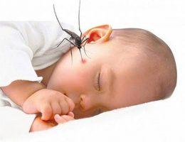 Cảnh báo nguy cơ bùng phát dịch sốt xuất huyết trong mùa hè