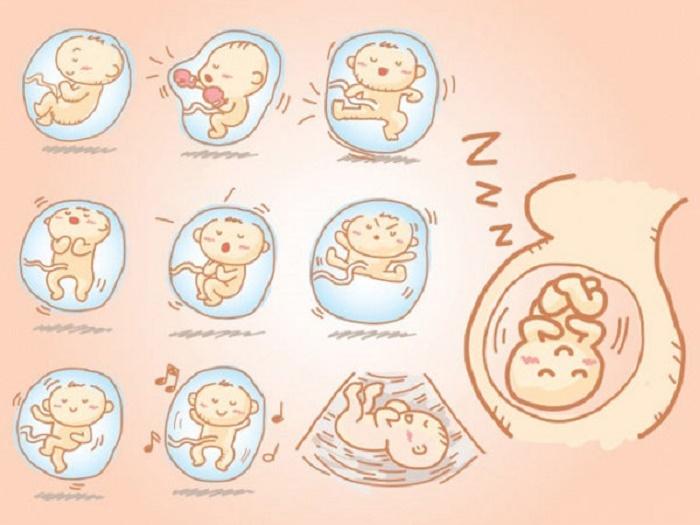 Mỗi em bé có chu kỳ sinh học khác nhau dẫn đến nhịp thai máy, thời điểm máy khác nhau.