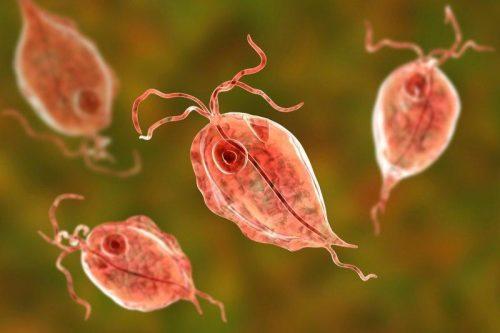 Viêm âm đạo do Trichomonas là bệnh lây truyền qua đường tình dục