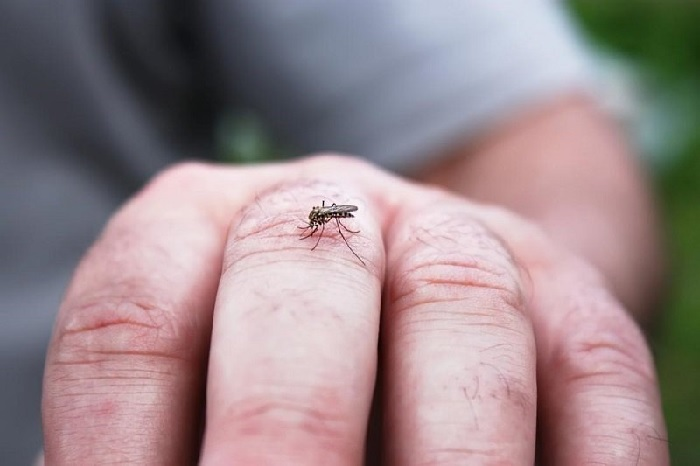 Sốt xuất huyết lây qua 3 con đường chính: từ muỗi sang người, từ người sang muỗi, qua đường lấy máu hoặc dùng chung kim tiêm