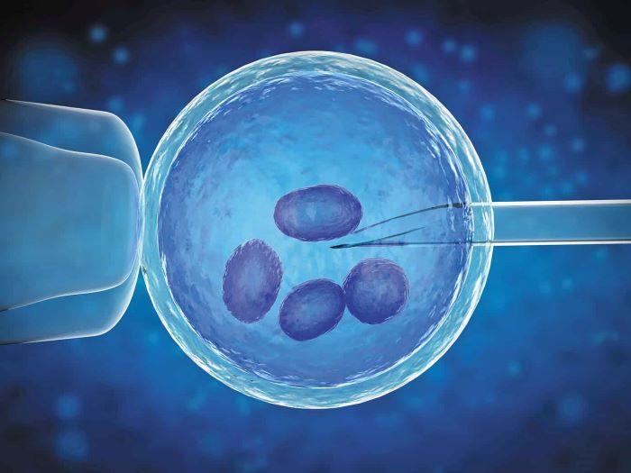 Thụ tinh trong ống nghiệm là phương pháp chữa vô sinh hiếm muộn phổ biến trong y học