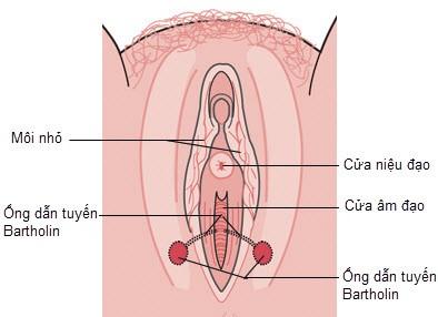 Viêm nang tuyến Bartholin