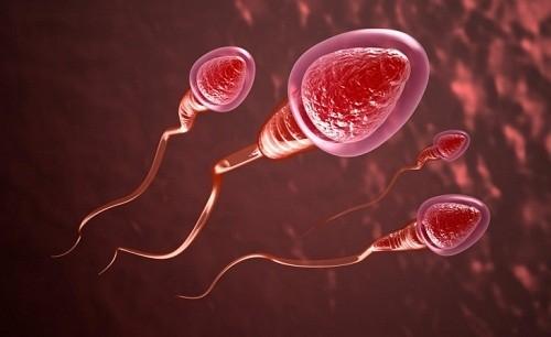Muốn thụ tinh nhân tạo bằng cách bơm tinh trùng