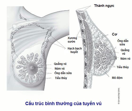 u-nhu-trong-ong-sua