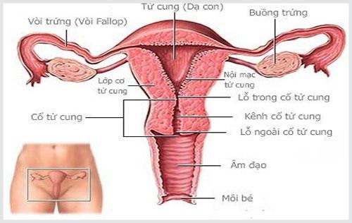 Ăn gì để ngừa bệnh ở tử cung?