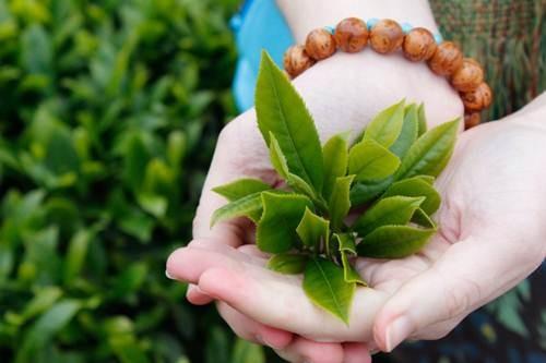 Bên cạnh sử dụng lá trà xanh, chị em nên khám và điều trị một cách chuyên khoa