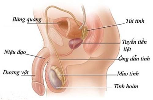 Dấu hiệu bệnh viêm mào tinh hoàn ở nam giới