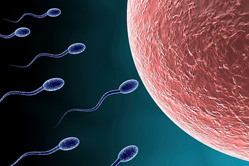 Sự di chuyển của tinh trùng phụ thuộc vào vận động vẫy đuôi theo cơ chế vận động của nòng nọc