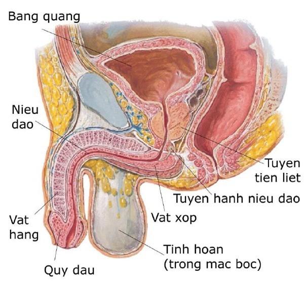Viêm tuyến tiền liệt ở nam giới: Nguyên nhân và cách điều trị