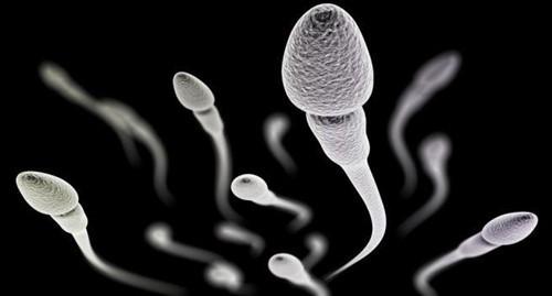 Tỉ lệ tinh trùng tiến tới nhanh như thế nào là bình thường?
