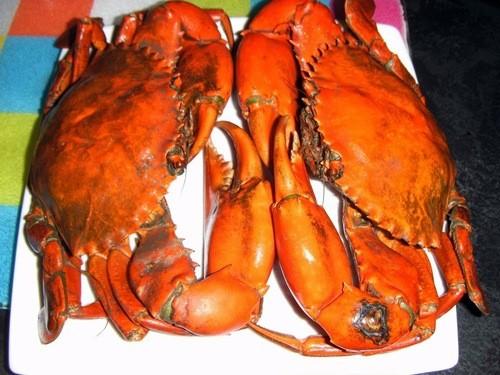 Cua biển chứa nhiều dưỡng chất tốt cho mẹ và thai nhi