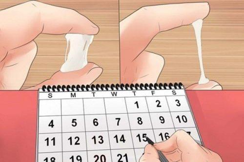 Nhận biết ngày rụng trứng thế nào?