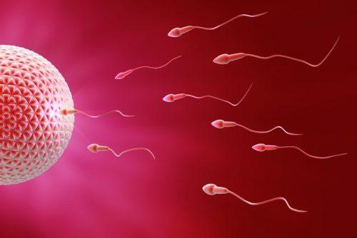 Chỉ cần một tinh trùng khỏe mạnh, di chuyển vào tử cung gặp trứng thì có khả năng thụ thai.