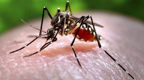 Cảnh báo gia tăng bệnh truyền nhiễm trong mùa hè